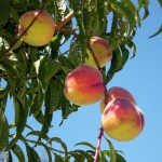 The Lowest Hanging Fruit During Tax Season